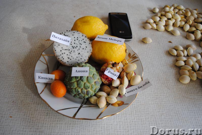 Экзотические саженцы семена - Растения комнатные - Имеется много редких, лекарственных растений. Ази..., фото 1