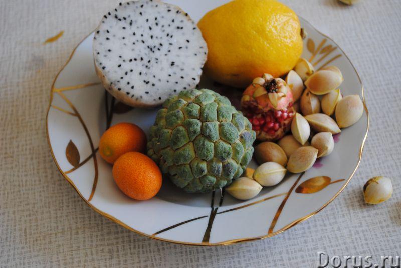 Экзотические саженцы семена - Растения комнатные - Имеется много редких, лекарственных растений. Ази..., фото 2